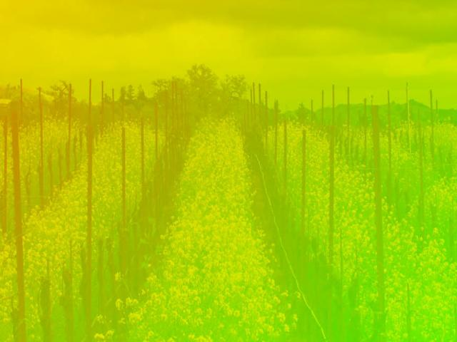 color gradient over vineyard